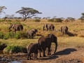 elephants-serengeti-bjorn-christian-torrissen-attribution-share-alike