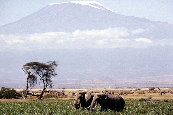 kilimanjaro-viault-attribution-share-alike