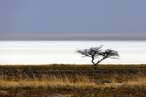 namibia-etosha-alchemist-hp-attribution-non-commercial-non-derivative