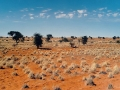 namibia-kalahari-elmar-thiel-attribution-share-alike