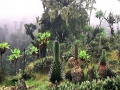 ruwenzori-bujuku-valley-uganda-manuel-werner-attribution-share-alike