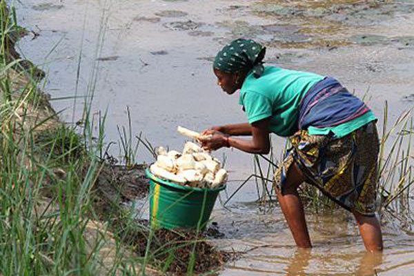 dfid-rdcongo-washing-cassava-manoic-attribution-share-alike0