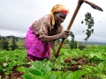 kenya-agriculture-neil-palmer-ciat-attribution-share-alike