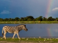 namibia-etosha-np-yathin-s-krishnappa-attribution-share-alike